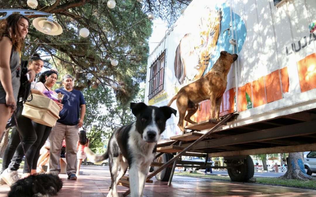 Luján de Cuyo conmemora el Día Mundial del Animal
