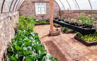 Luján de Cuyo vuelve a distribuir semillas para huertas orgánicas
